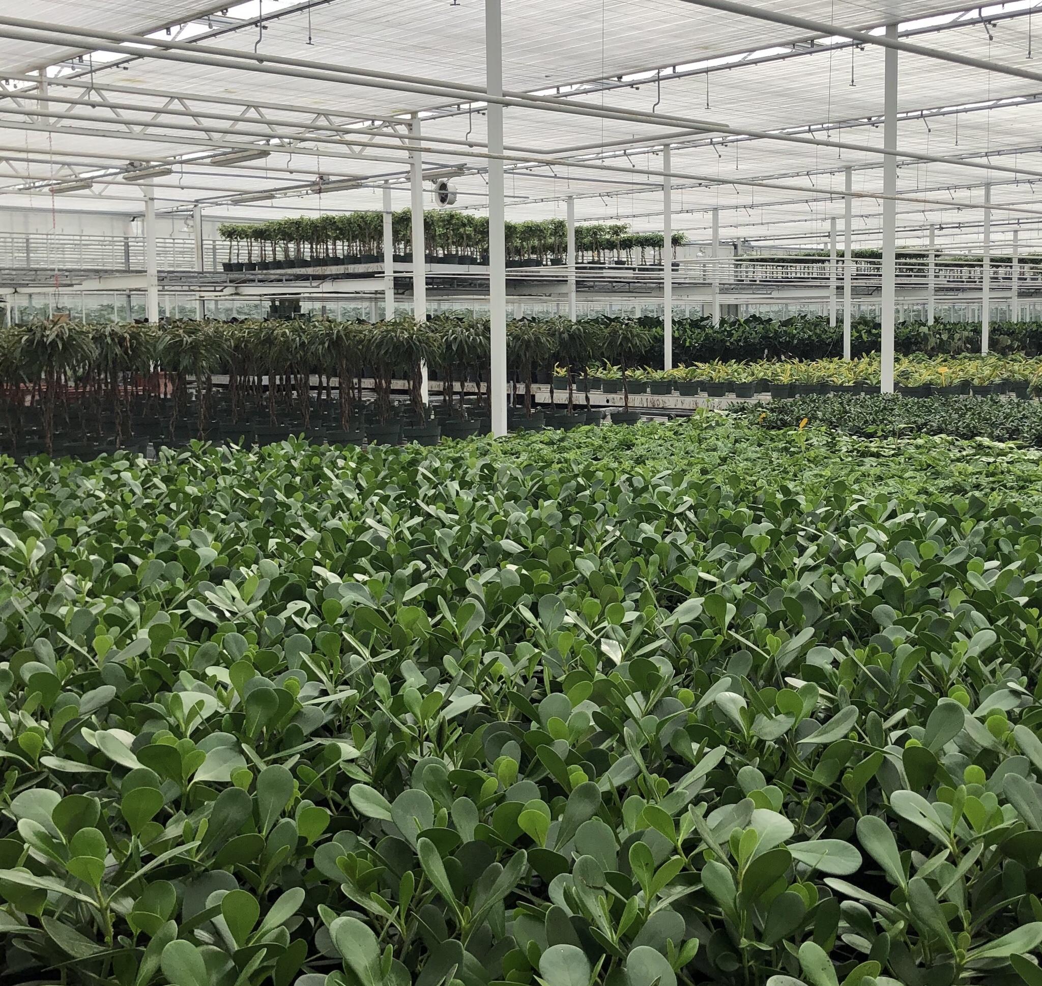 Vacature order afhandelaar tuinbouw